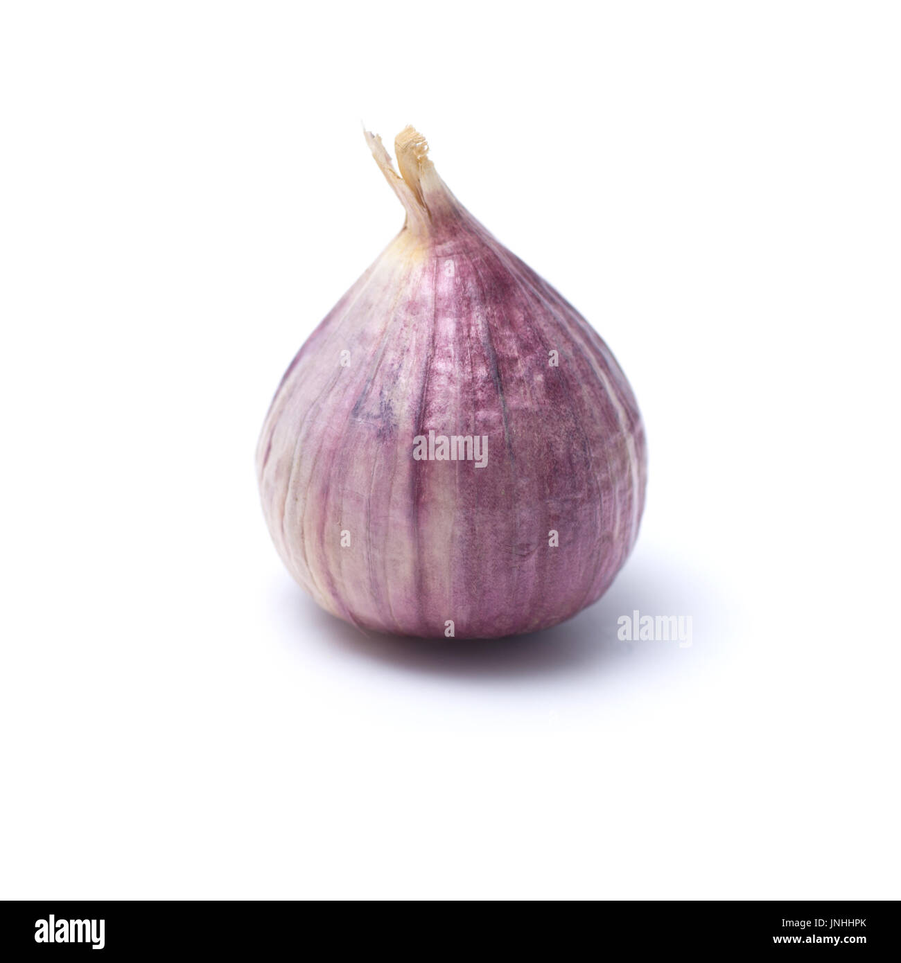 Garlic or Allium ampeloprasum var. ampeloprasum isolated on white background - Stock Image