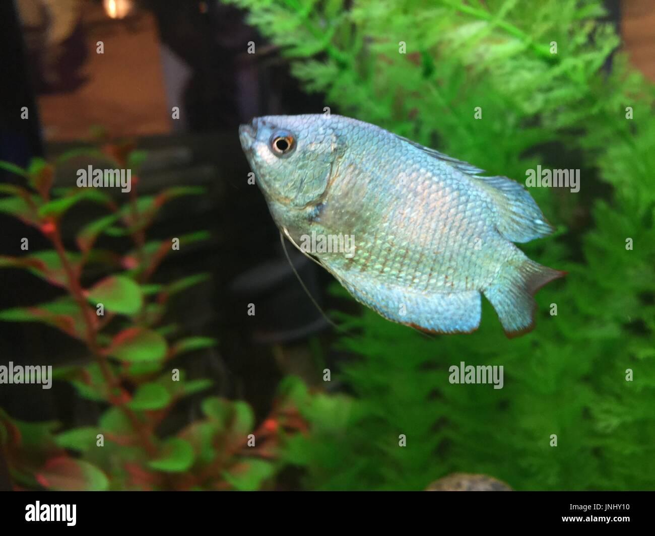 Freshwater Fish Biology Stock Photos & Freshwater Fish Biology Stock ...