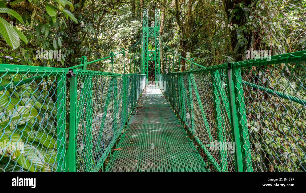 Green hanging bridge in Rainforest of Monteverde - Stock Image