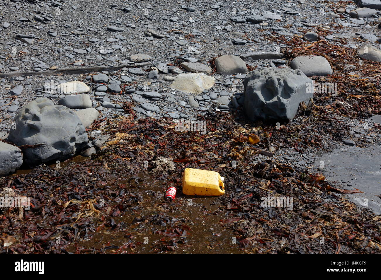Plastic container and infamously discarded Coke can amidst kelp seaweed and shale washed up on beach in Dorset UK Stock Photo
