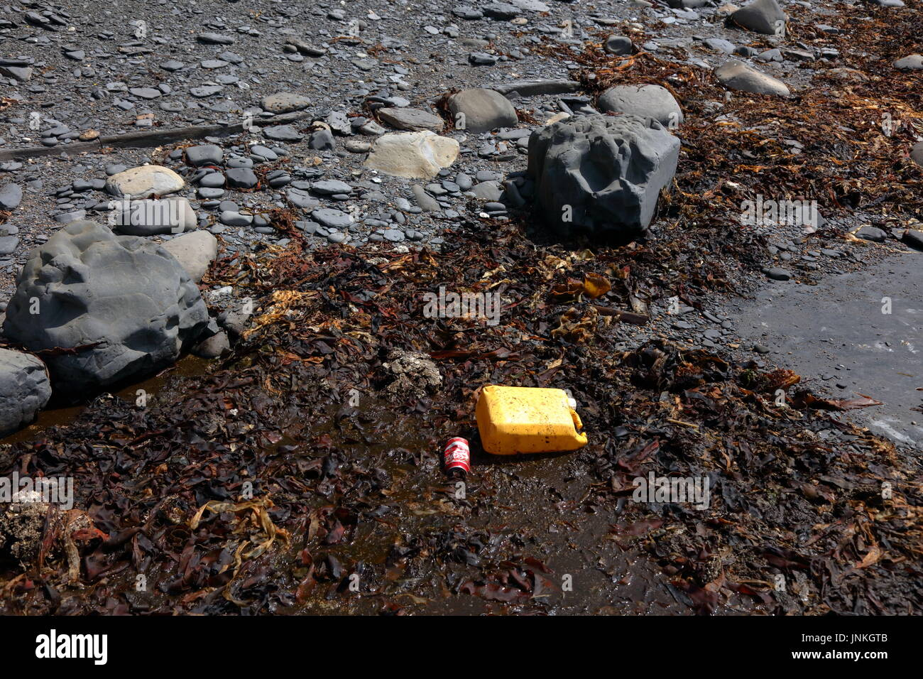 Plastic container and infamously discarded Coke can amidst kelp seaweed and shale washed up on beach in Dorset UK - Stock Image