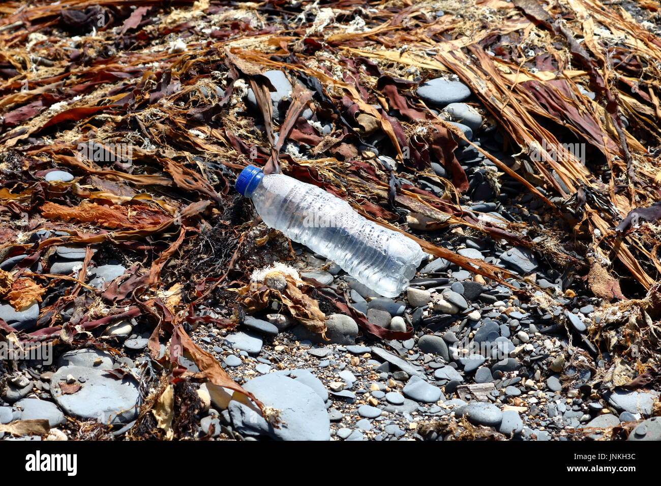 Plastic container amidst kelp seaweed and shale washed up on beach in Dorset UK - Stock Image