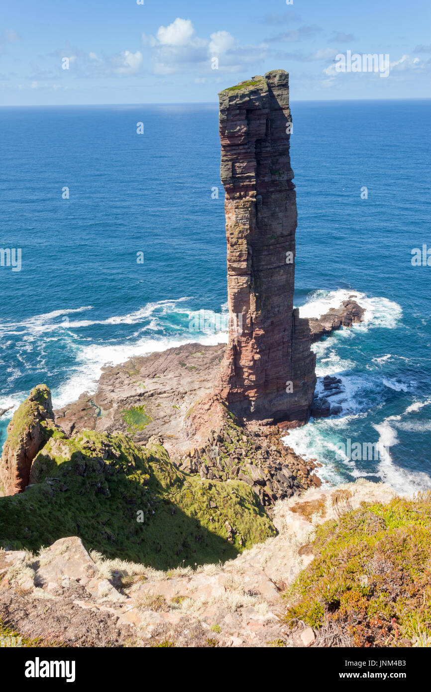 The Old Man of Hoy, a rock stack popular with climbers, Hoy, Orkney UK - Stock Image