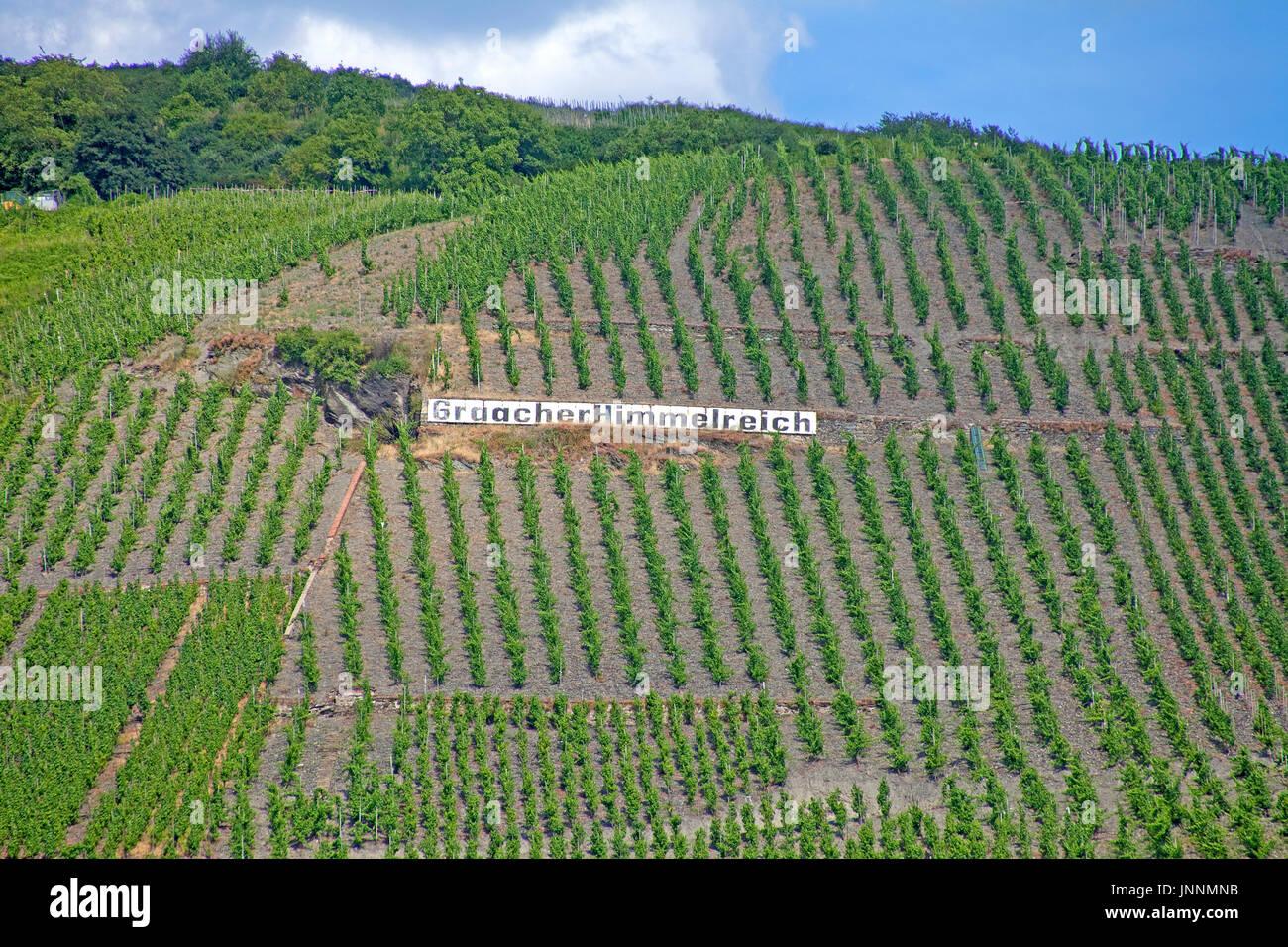 Graacher himmelreich, Graach, Mittelmosel, Mosel, Rheinland-Pfalz, Landkreis Bernkastel-Wittlich, Deutschland, Europa - Stock Image