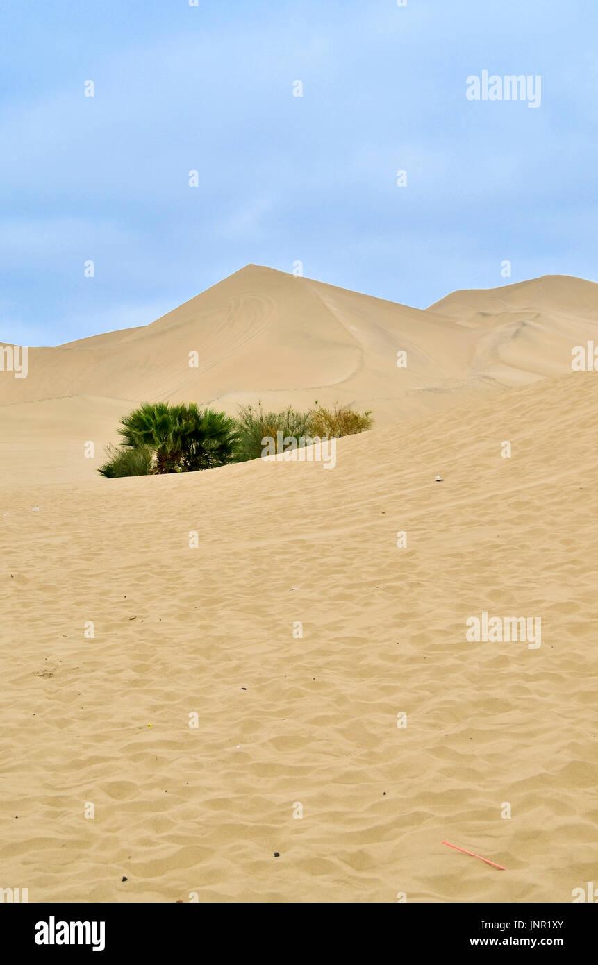 Exploring the desert - Stock Image