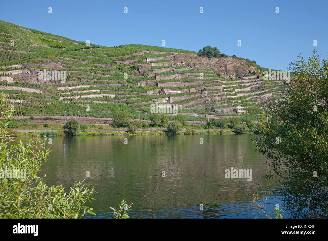 Terrassenmosel, Untermosel, Landkreis Mayen-Koblenz, Rheinland-Pfalz, Deutschland, Europa   wine terrace, Mosel river, Germany - Stock Image