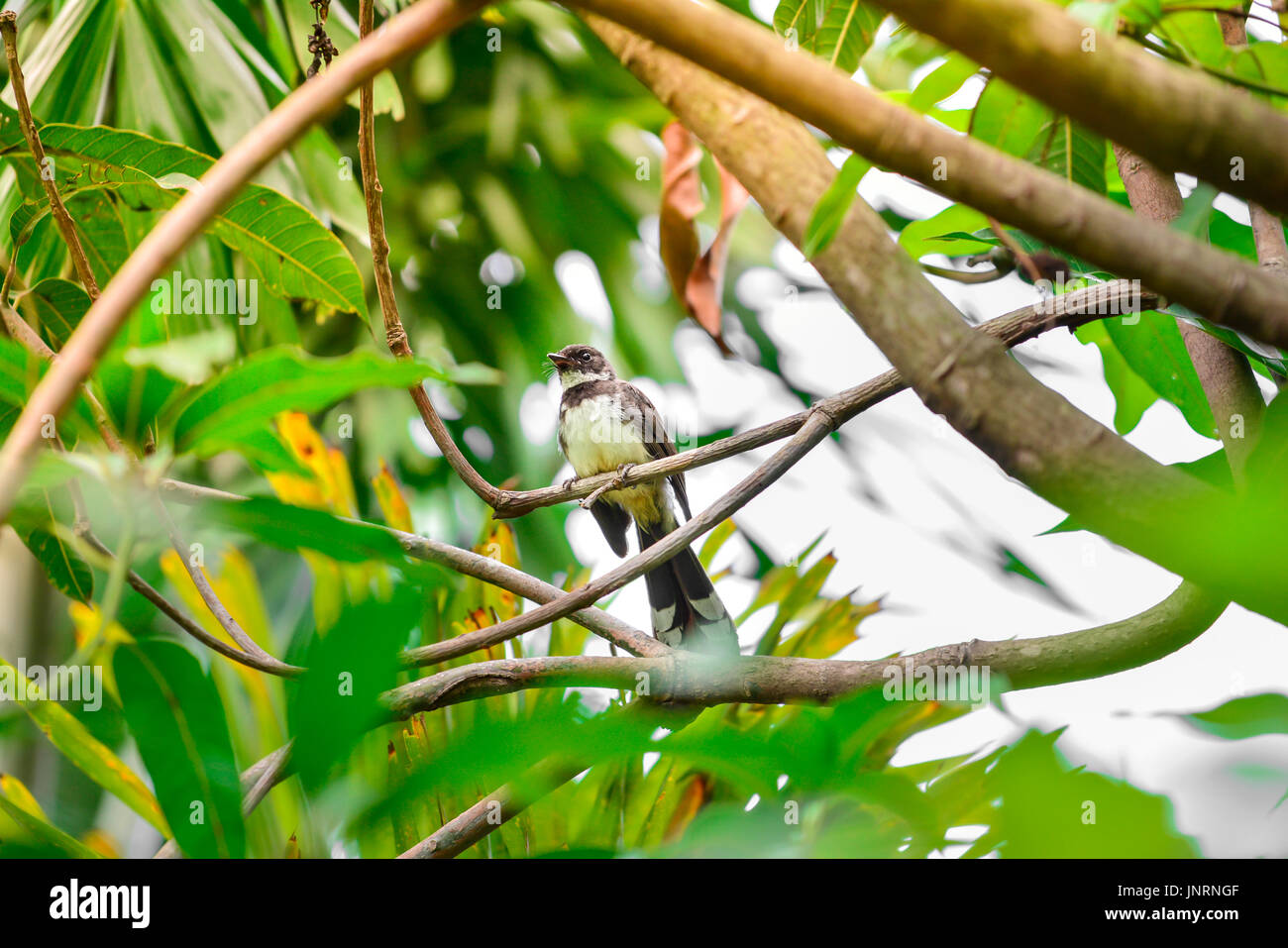 A bird on a green tree - Stock Image