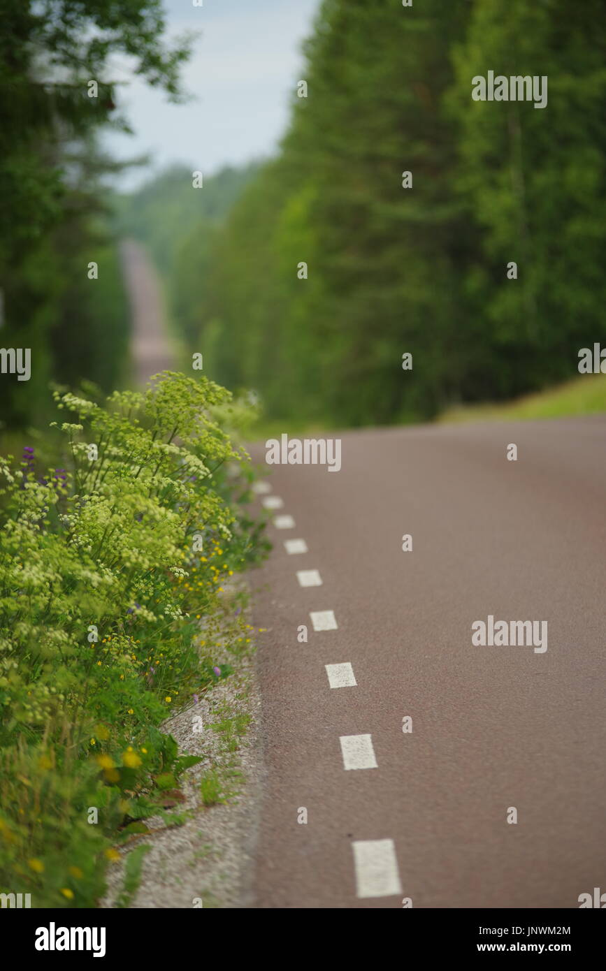 roadside line into the green summer forrest - Stock Image
