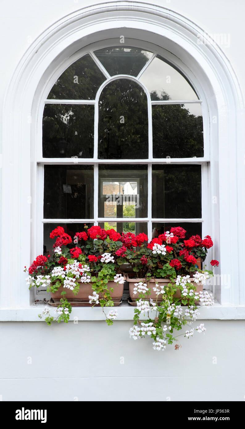 Window box filled with pelargoniums on Colebrooke Row in Islington, North London N1 England UK  KATHY DEWITT Stock Photo