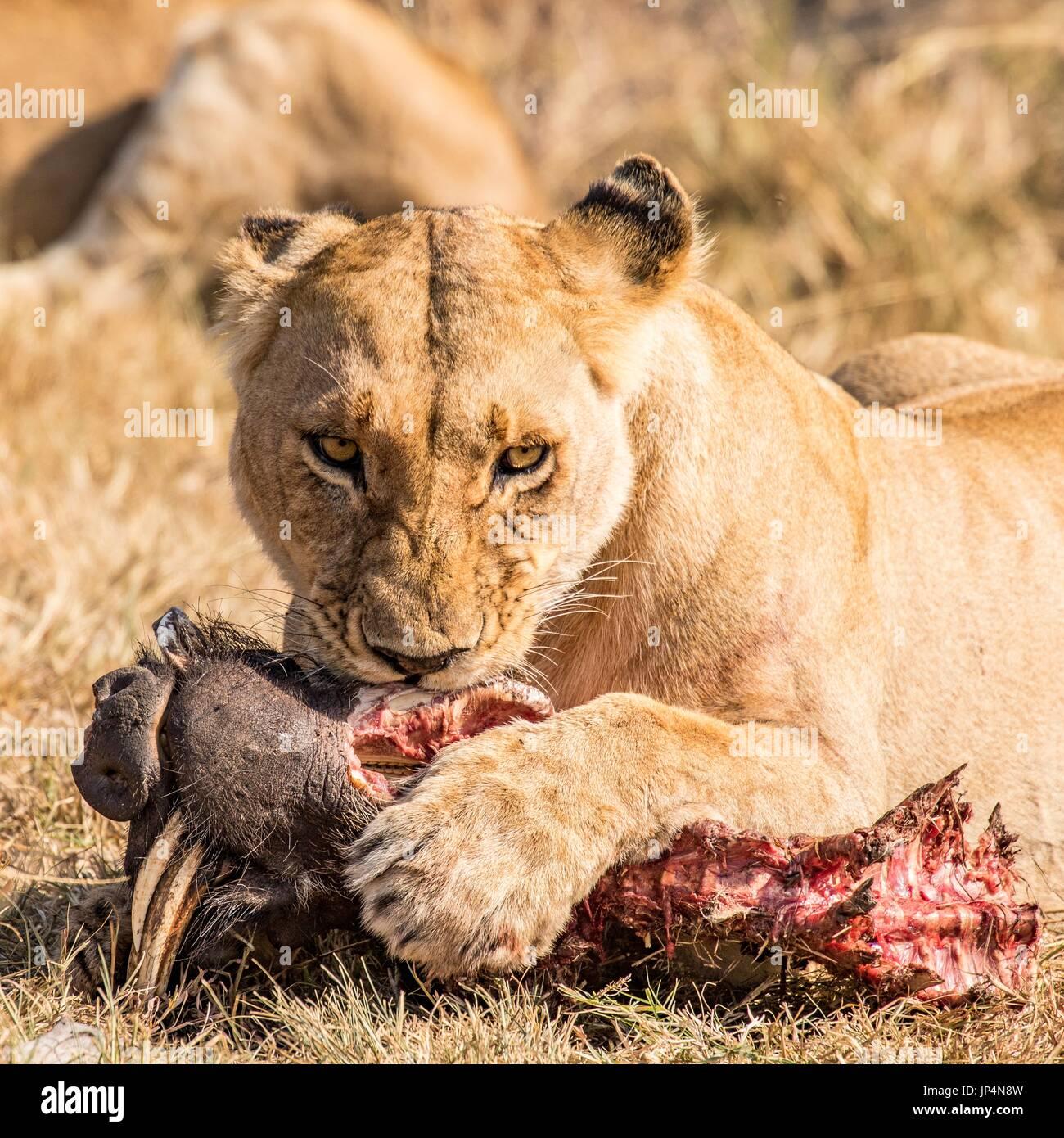 Beautiful African Wildlife - Stock Image