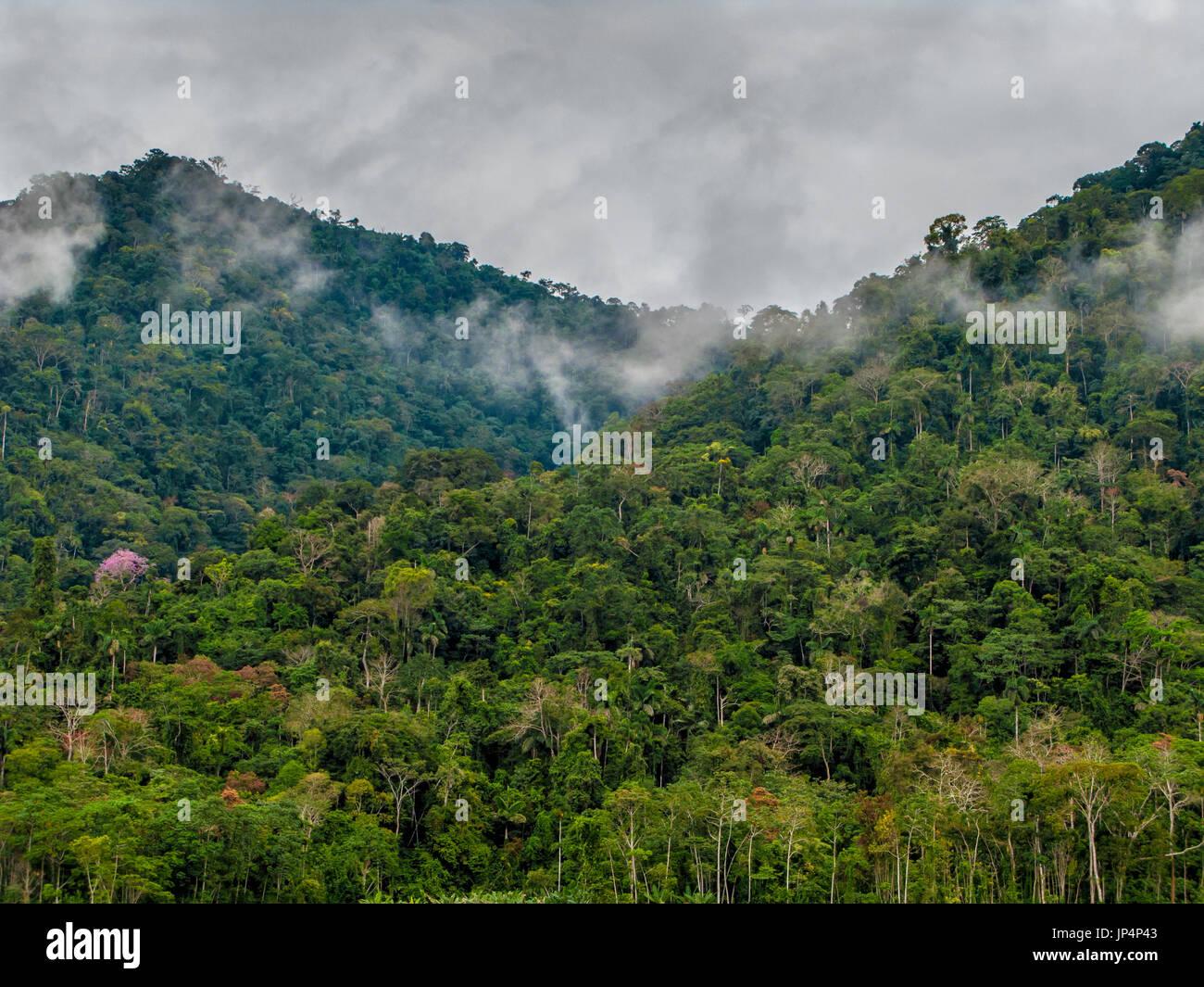 Rain forest in Manu National Park, Peru - Stock Image