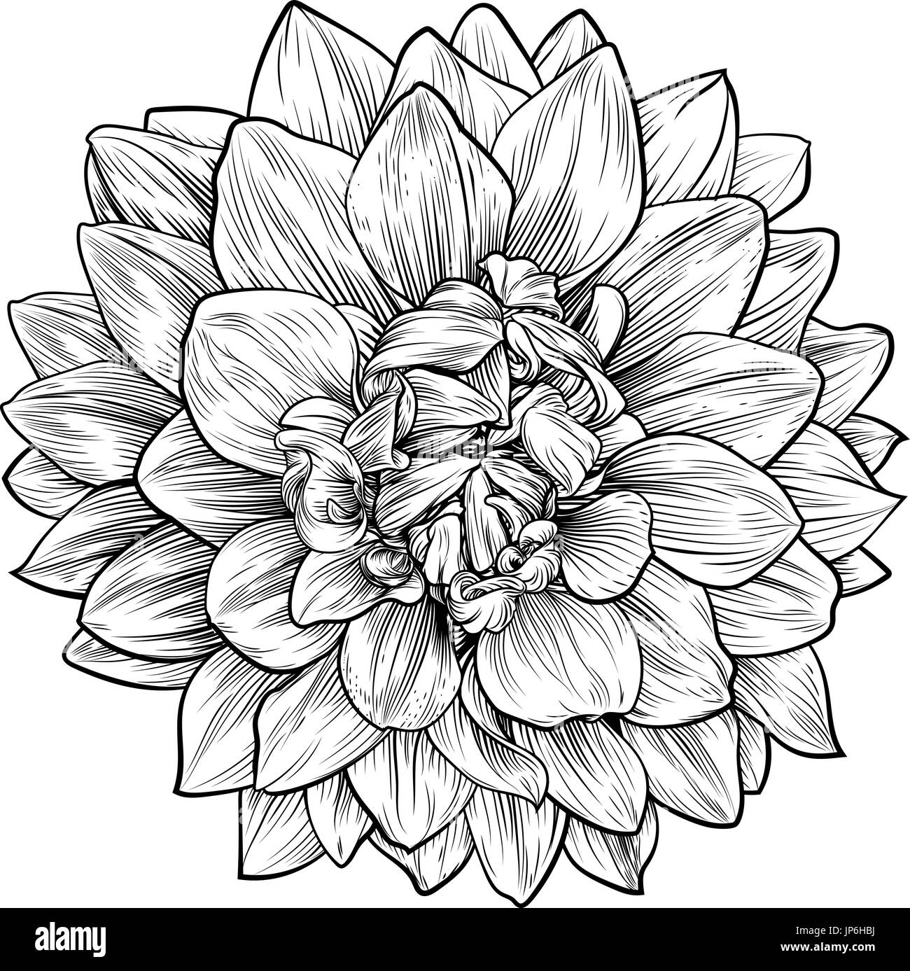 Dahlia Flower Stock Vector Images Alamy