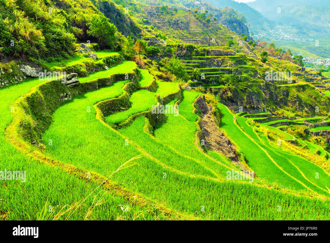 Vietnam Rice Paddy Field. Grow, harvest / Nature landscape green Rice Terraces on background amazing tropical nature and scenery mountain on horizon - Stock Image