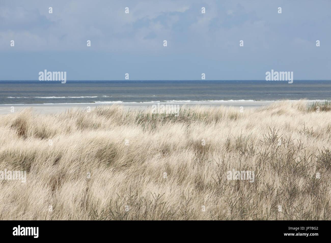 Europe, Germany, Friesland, Langeoog - Ein ruhiger Frühlingsmorgen auf Langeoog .  A silent spring morning on Langeoog Germany - Stock Image