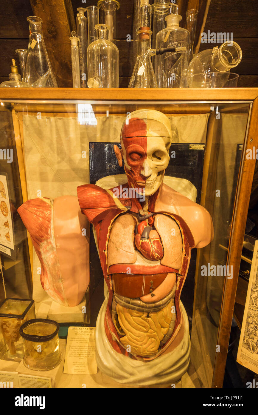 England, London, Southwark, The Old Operating Theatre and Herb Garrett Museum, Display of Historical Anatomical Model used for Teaching - Stock Image