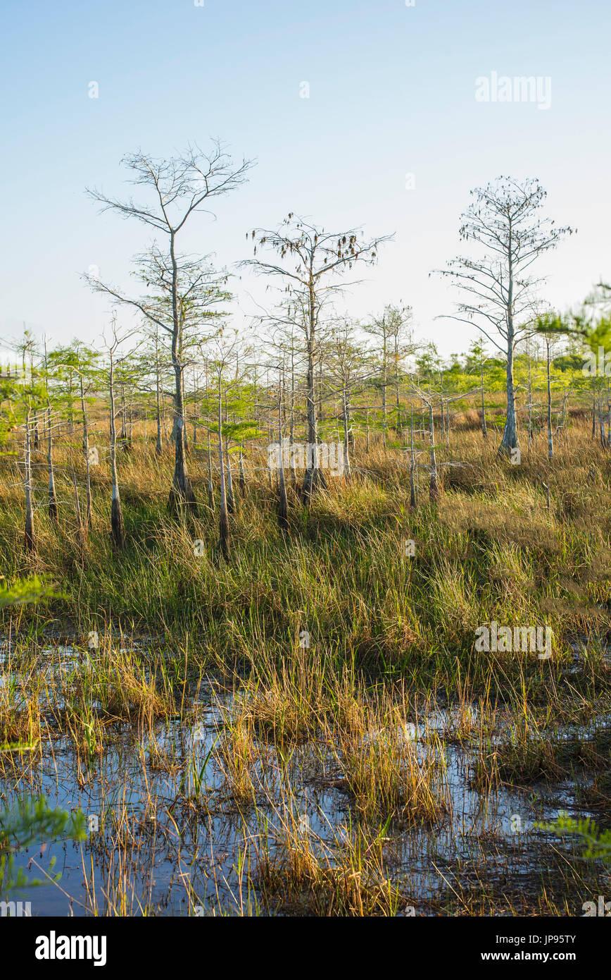The Everglades National Park, Florida, USA - Stock Image