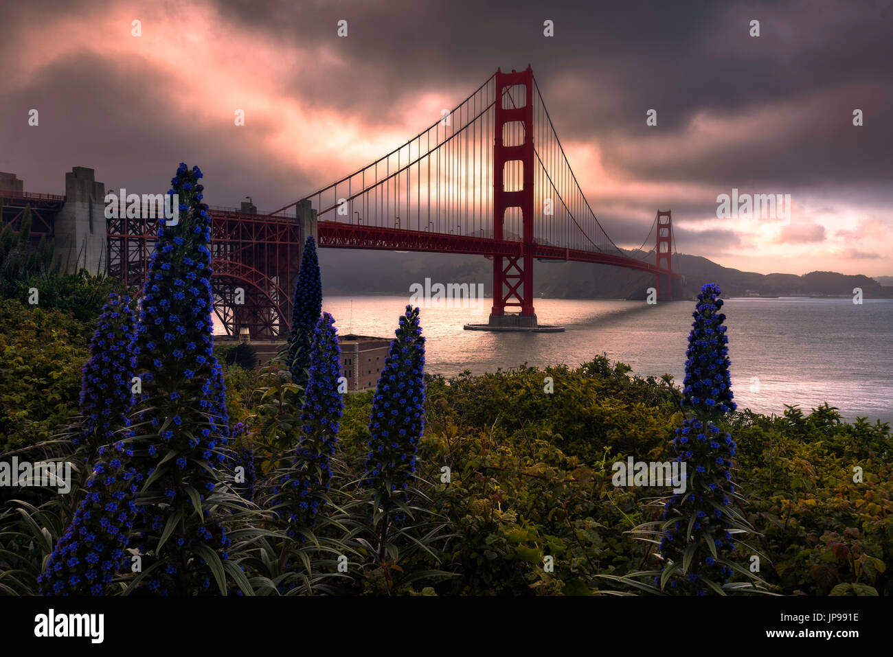 Wildflowers and the Golden Gate Bridge during sunset. - Stock Image