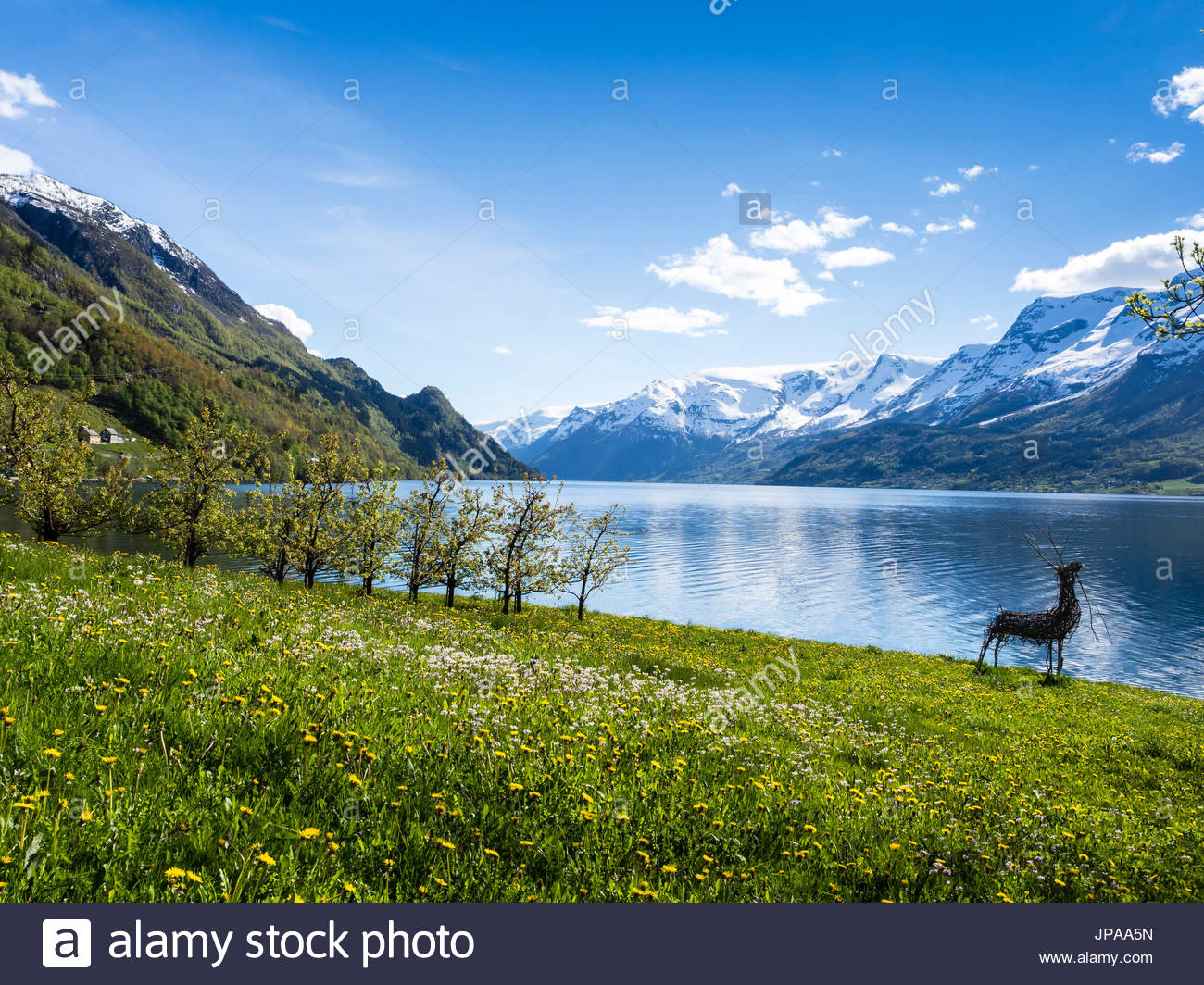 View of snow-covered mountains, fjord and apple trees in bloom, spring, Hardangerfjord near Lofthus, Hardanger, - Stock Image