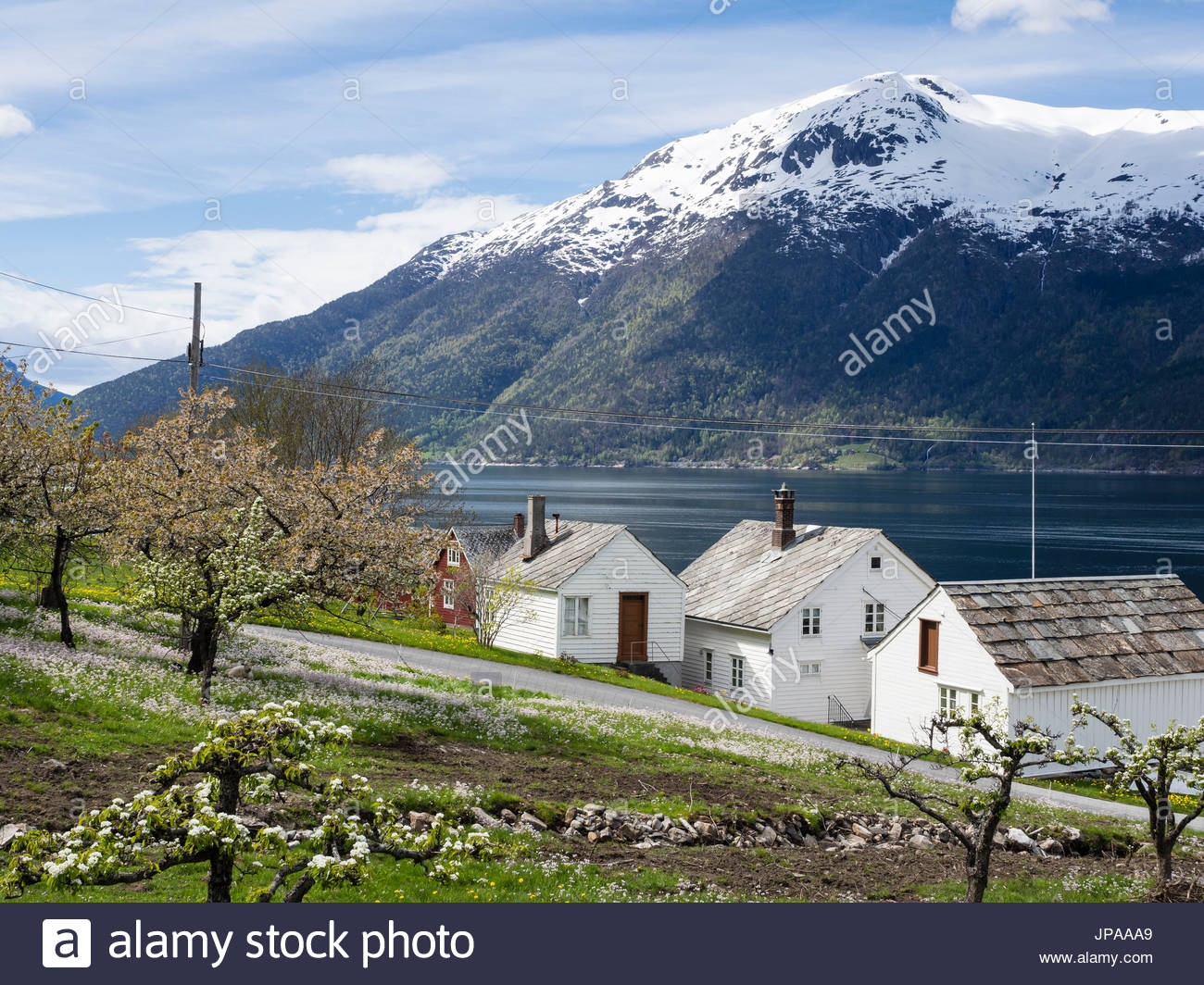 View of snow-covered mountains, fjord and apple trees in bloom, spring, white houses, Hardangerfjord near Lofthus, - Stock Image