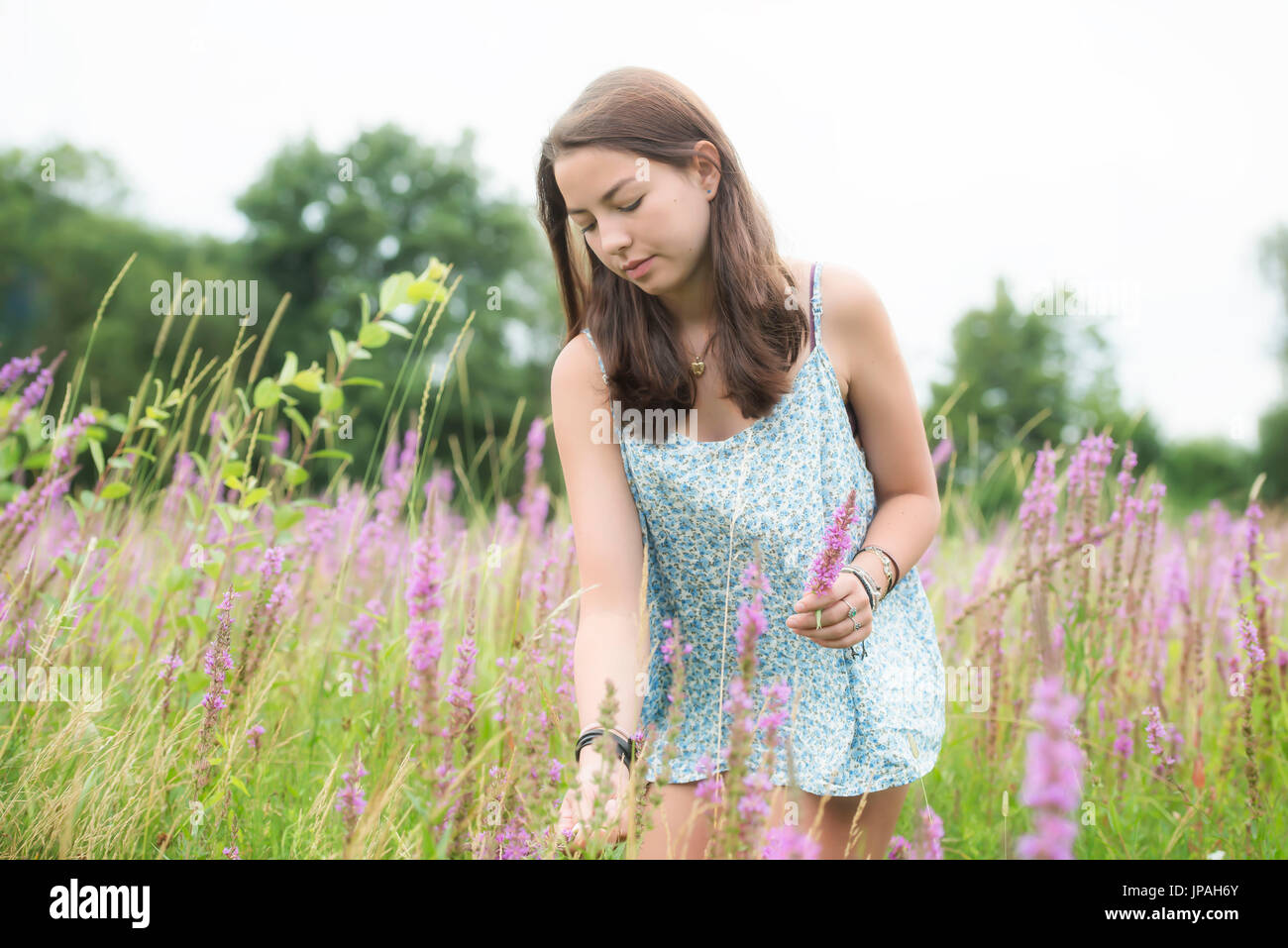 girl in high grass - Stock Image