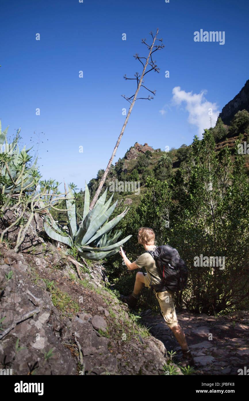 Man marvels at at big aloe Vera in the wayside in the Garajonay national park on La Gomera. Stock Photo