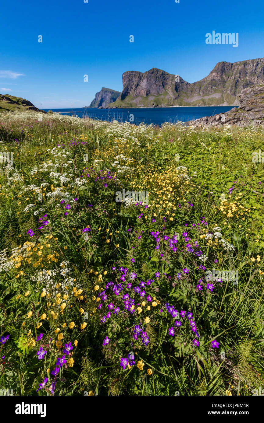 Colorful flowers and green meadows frame the blue sea Sorland Vaeroy Island Nordland county Lofoten archipelago Norway Europe - Stock Image