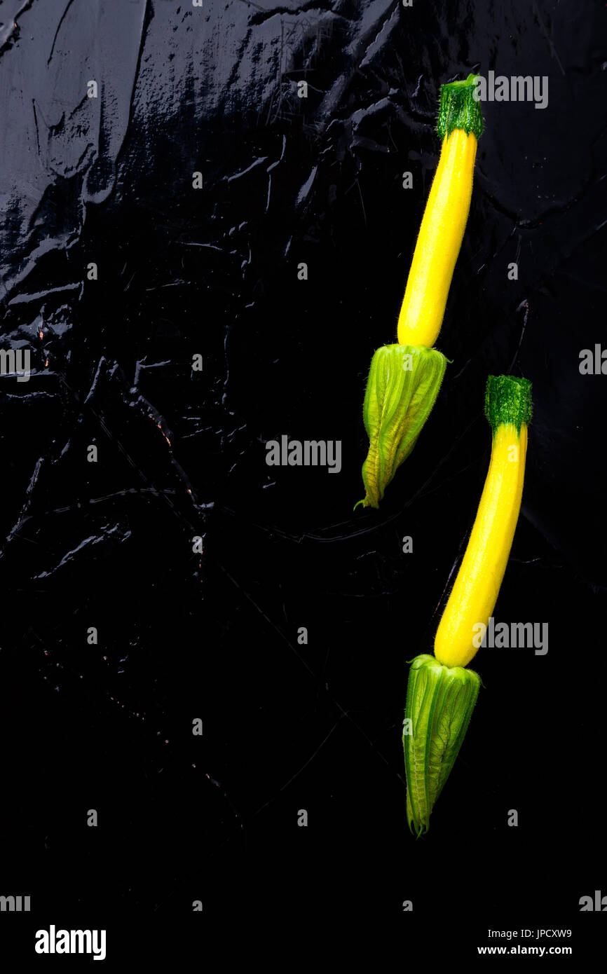 Yellow small zucchinis with flower on black background. Top view ...