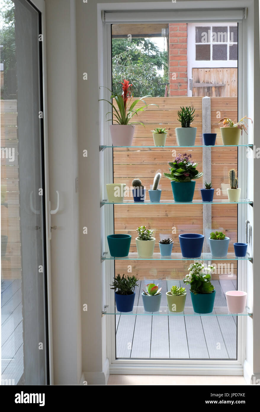 Window Display Of A Variety Of Cactus And Succulent Plants