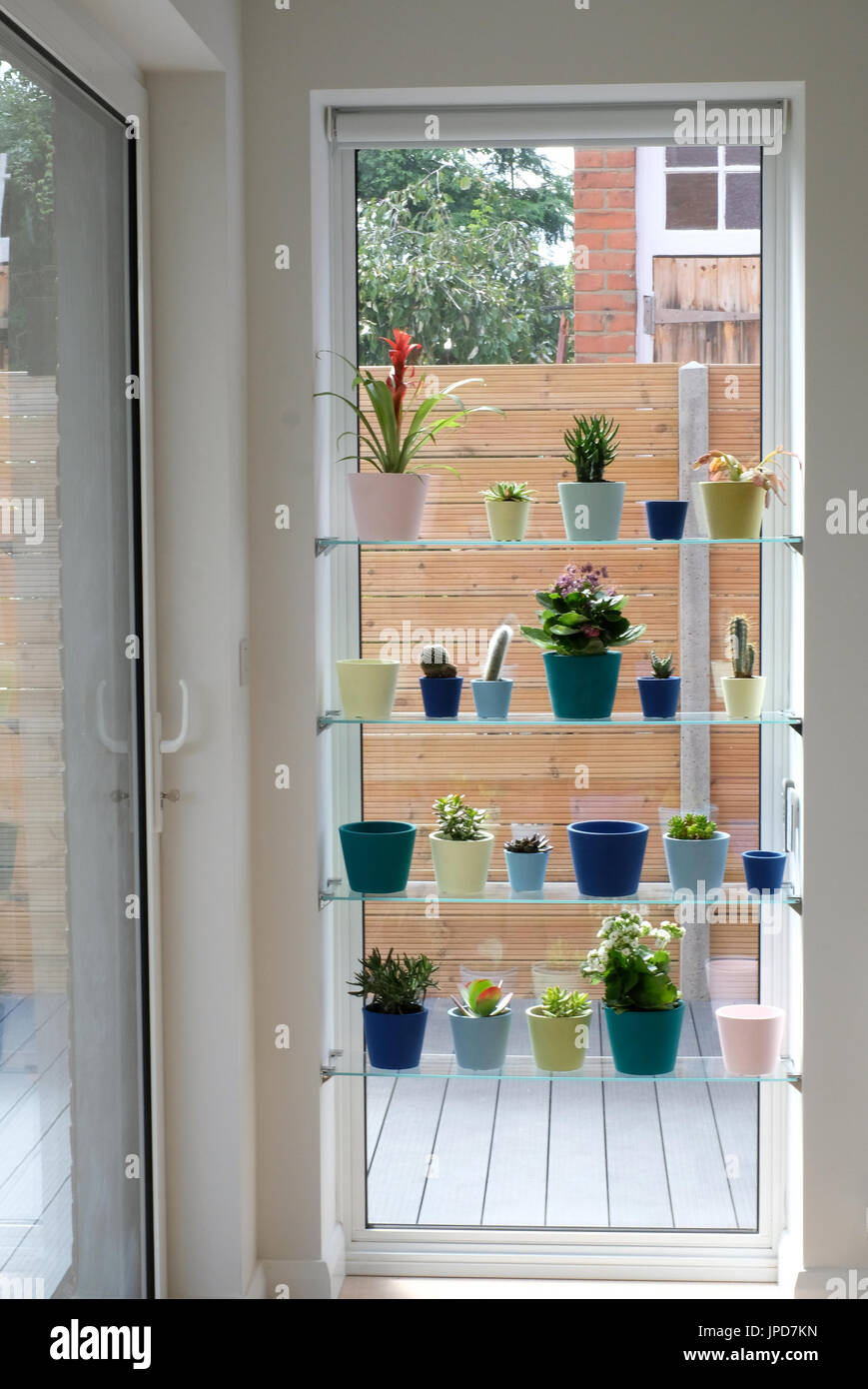 Window Display Of A Variety Of Cactus And Succulent Plants In Stock Photo Alamy