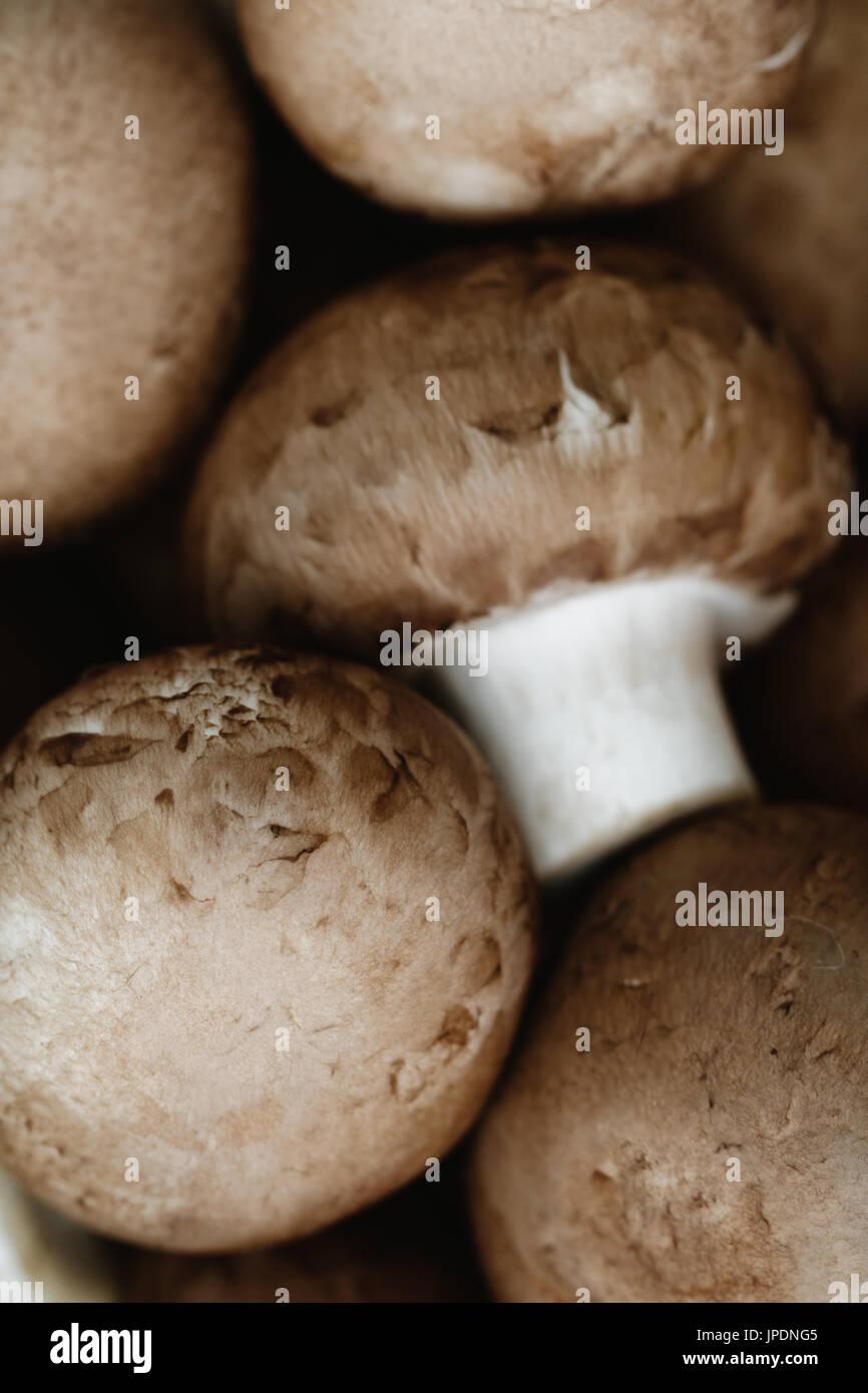 Macro shot of fresh champignons Portobello - Stock Image