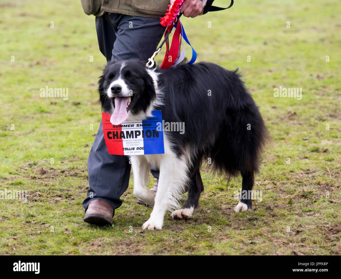 Rosettes Dog Show Stock Photos & Rosettes Dog Show Stock Images - Alamy
