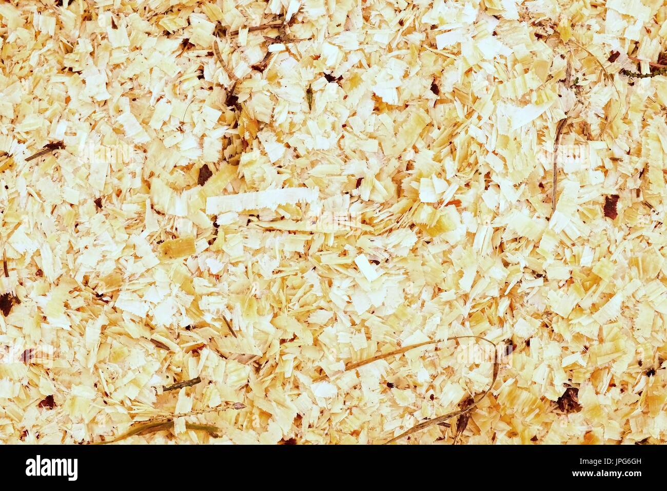 Sawdust Of Dry Alder Wood With Pieces Of Dry Brown Bark On Ground