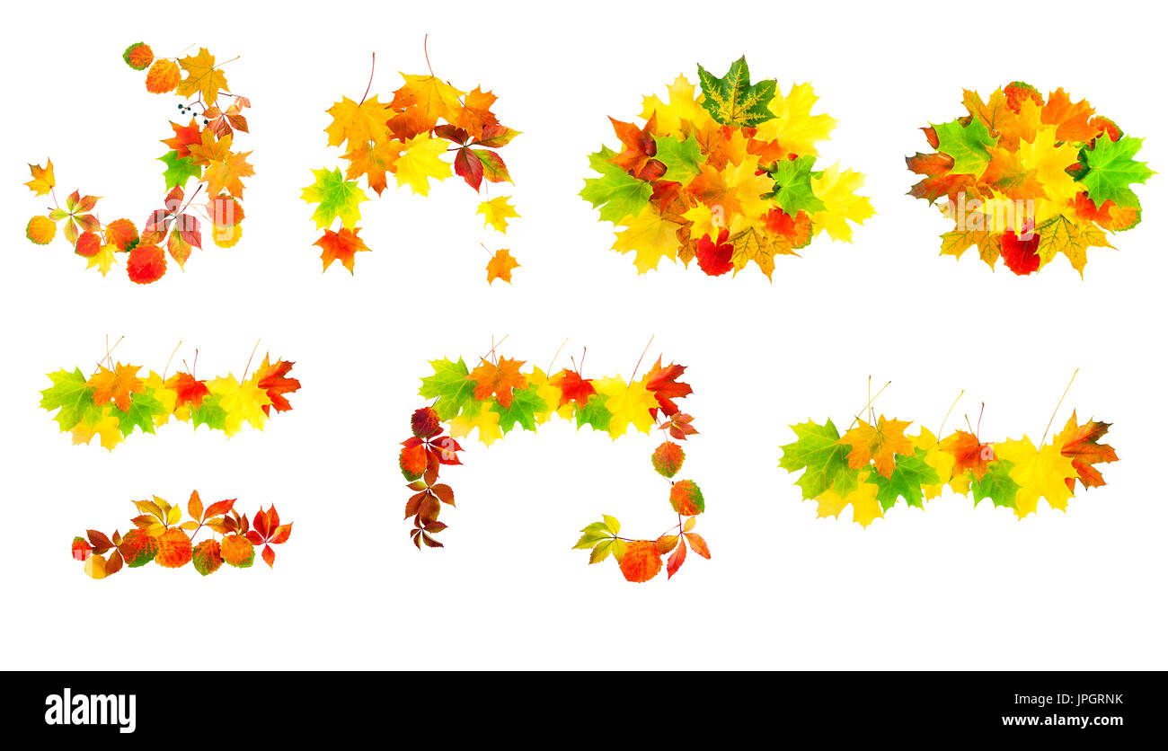 multi colored autumn leaves isolated on a white background set. collection design element Stock Photo