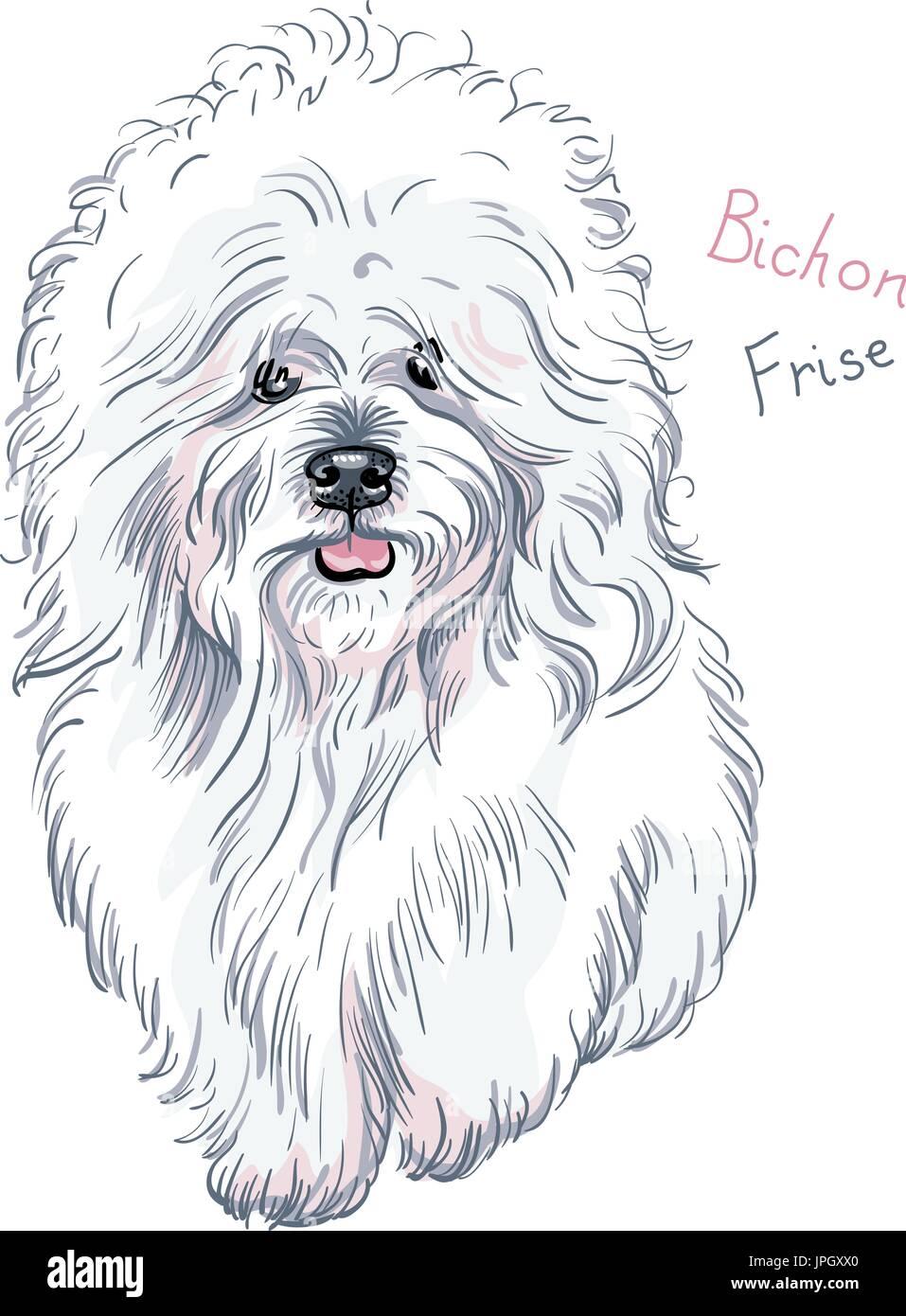 vector white cute dog Bichon Frise breed - Stock Vector
