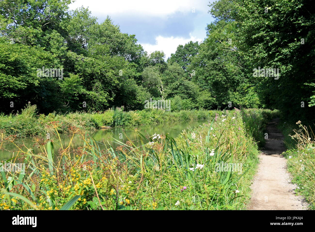 Basingstoke Canal south of Crookham Village, near Fleet, Hart District, Hampshire, England, Great Britain, United Kingdom, UK, Europe - Stock Image