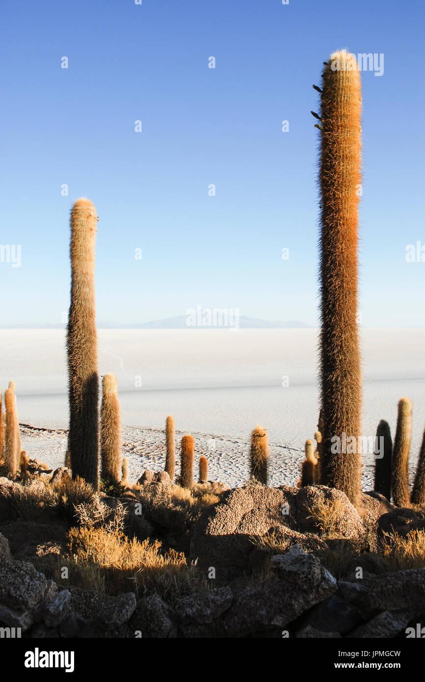 Isla de los pescadores, Salar de Uyuni, Bolivia - Stock Image