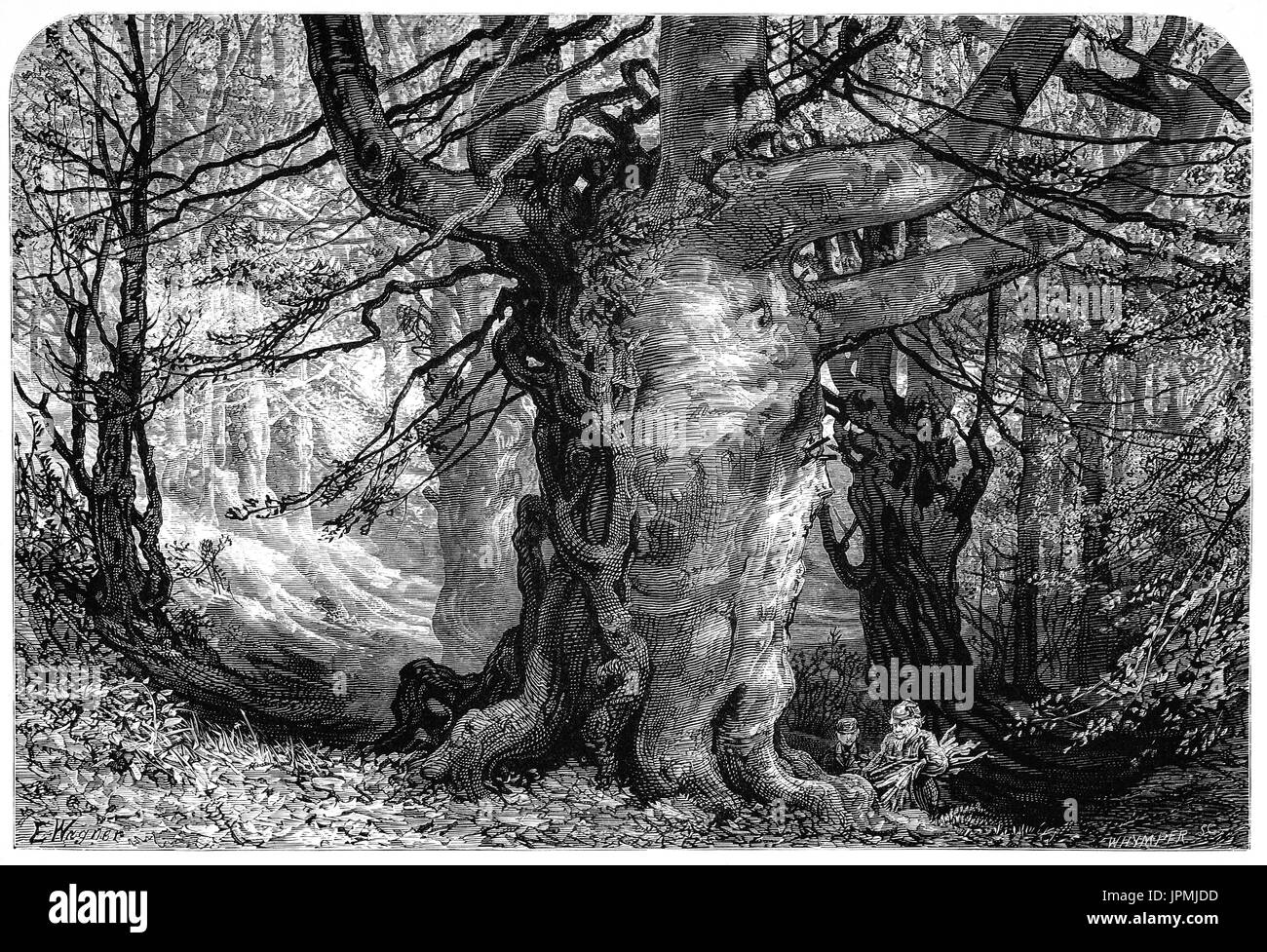 1870: People collecting wood below ancient beech trees in Burnham Beeches, to the west of Farnham Common in Burnham, Buckinghamshire, England. Open to the public it is now  a Site of Special Scientific Interest, a National Nature Reserve and a Special Area of Conservation. - Stock Image
