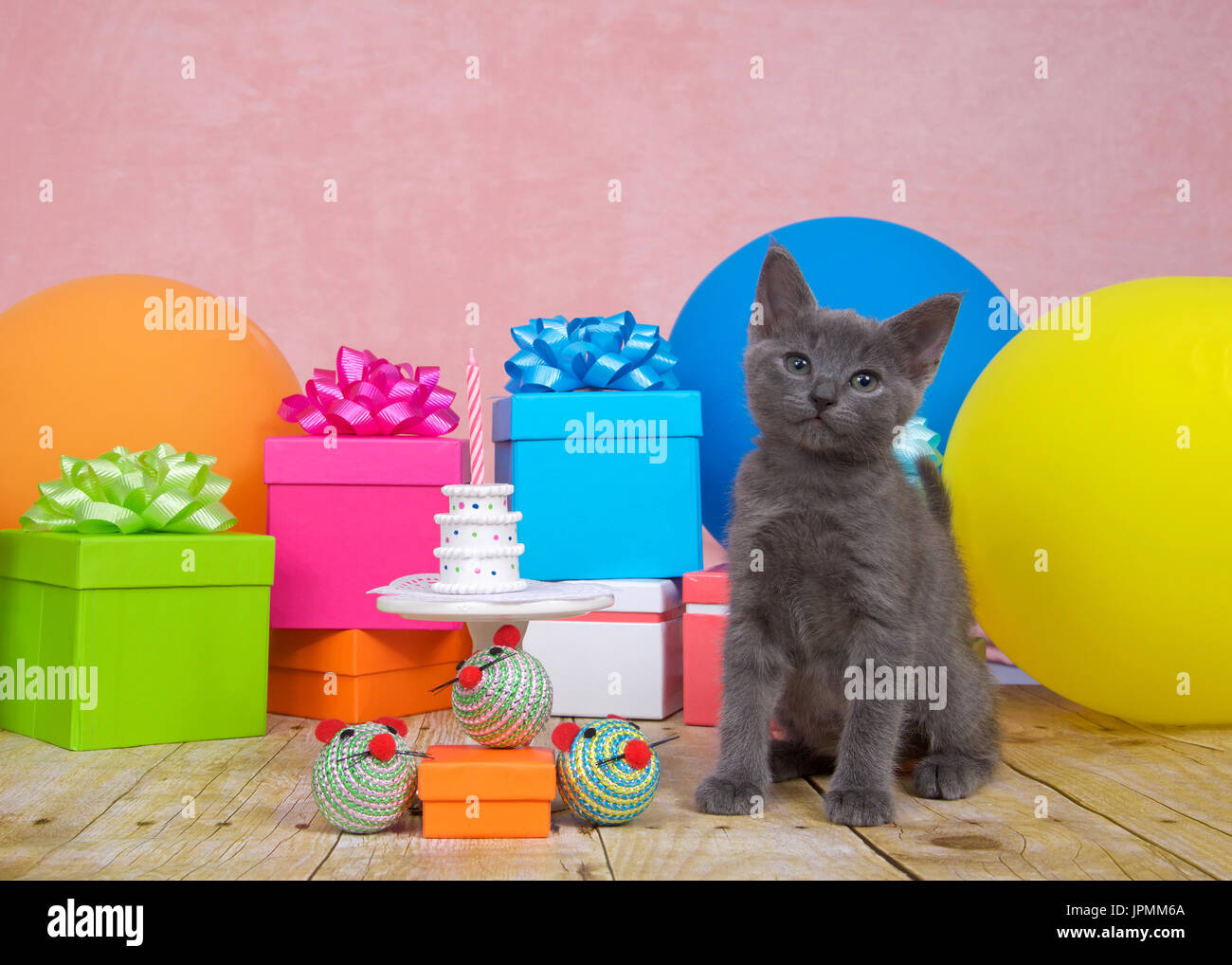 Fluffy Gray Kitten On Wood Floor Sitting Next To White Porcelain Table With Tiny Birthday Cake