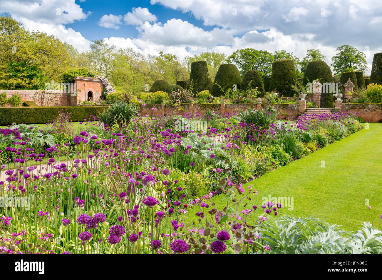 Colourful allium flowers in the garden borders at Packwood House - a preserved Tudor manor house in Warwickshire, England, UK - Stock Image