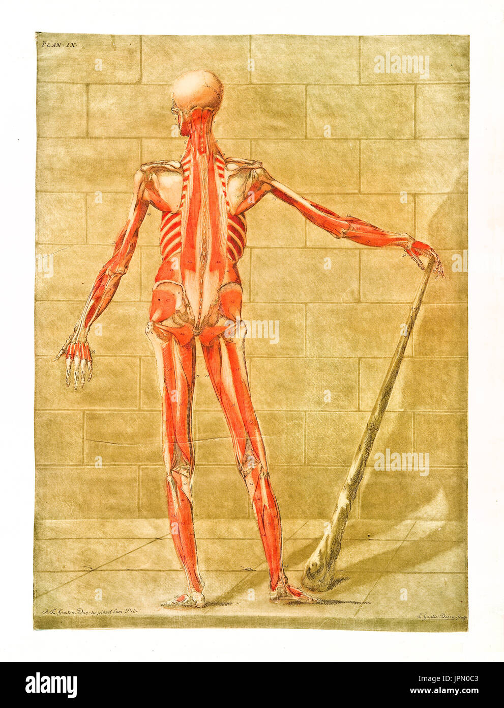 Vintage Engraving Anatomy Human Hand Stock Photos & Vintage ...