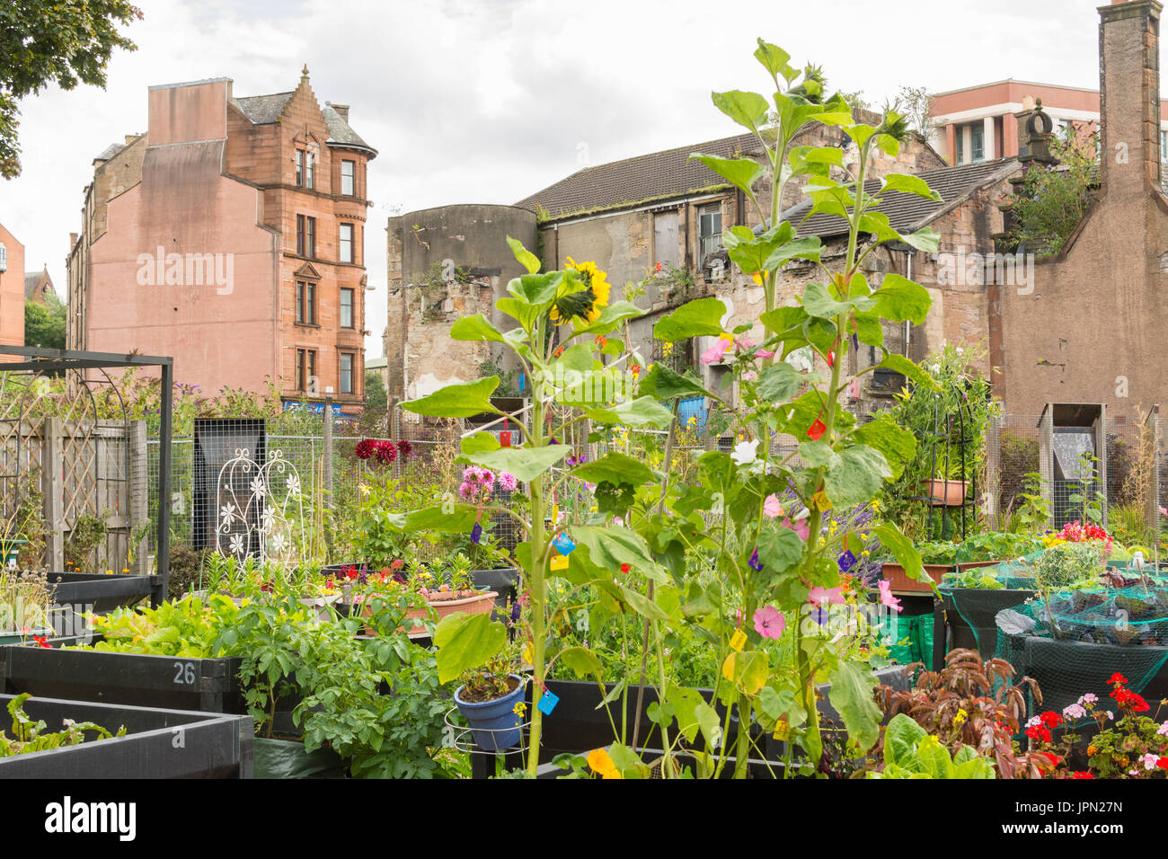 Greyfriars Garden a Stalled Spaces community garden, Merchant City area of Glasgow, Scotland,UK - Stock Image