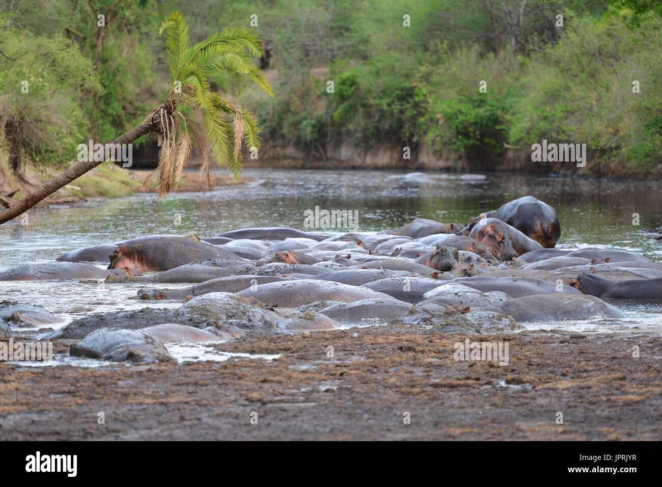 African Safari - Stock Image