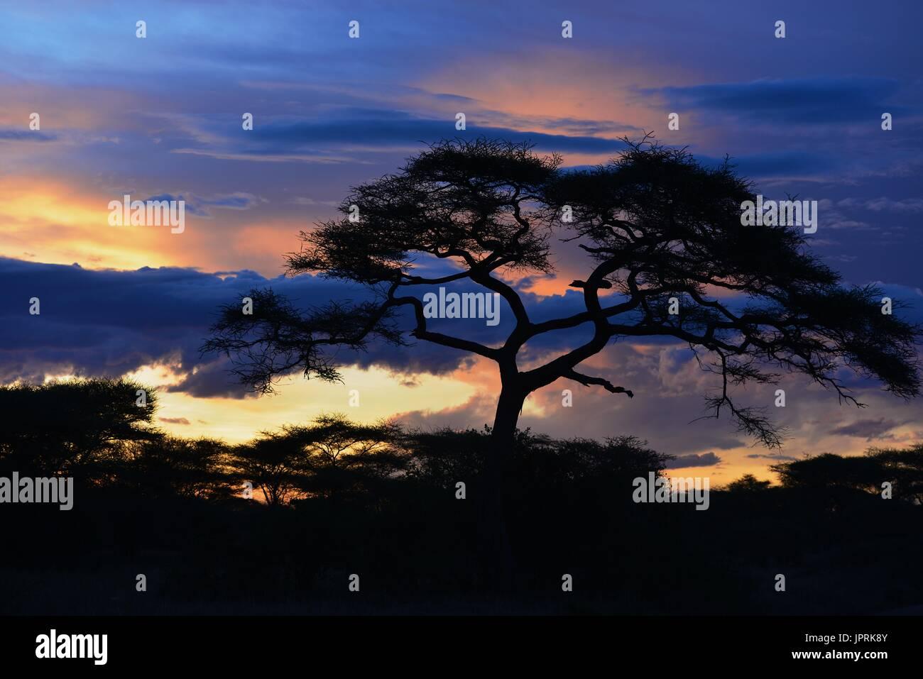 African Safari Landscape in Tanzania - Stock Image
