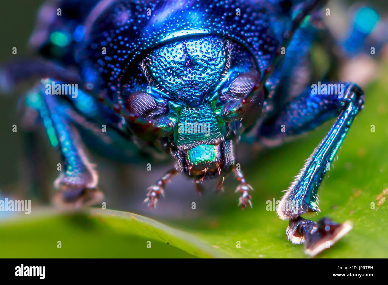 invertebrate - Stock Image