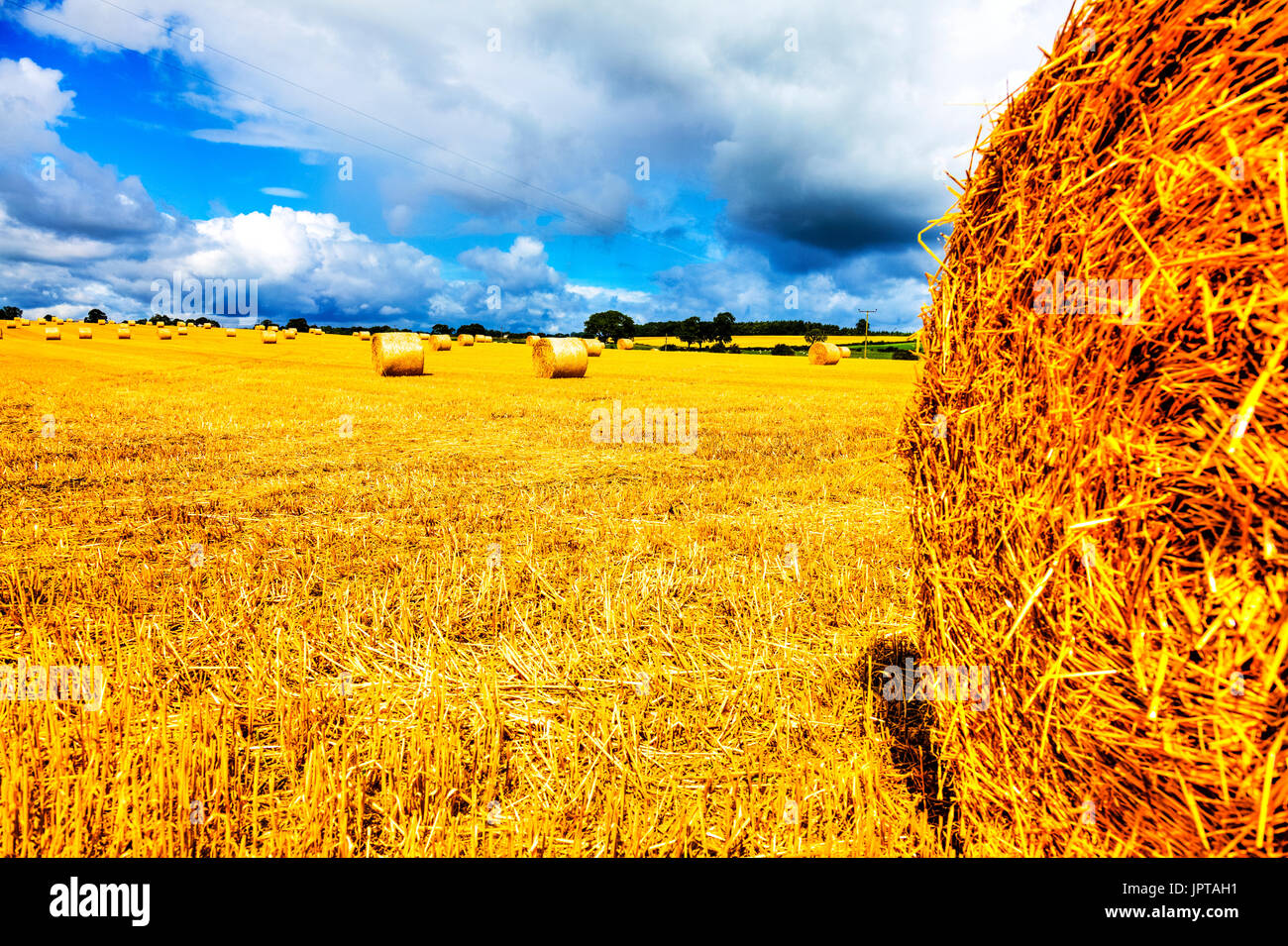 Straw bales, straw field, wheat field harvested, harvested wheat field, round straw bales, harvested straw, agriculture UK, UK wheat field, straw, - Stock Image