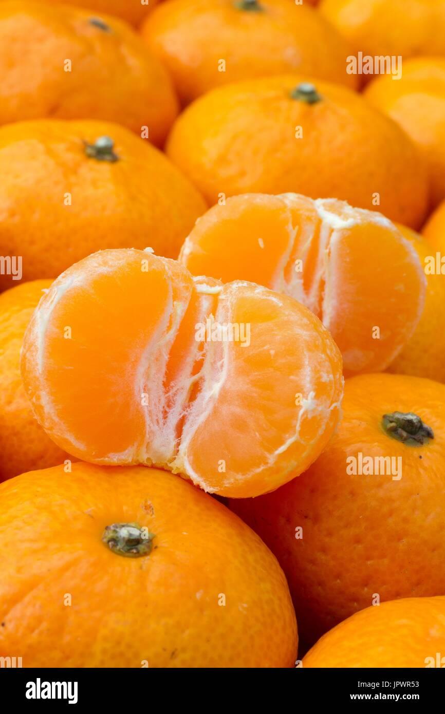 Kishu mandarins, Citrus kinokuni - Stock Image
