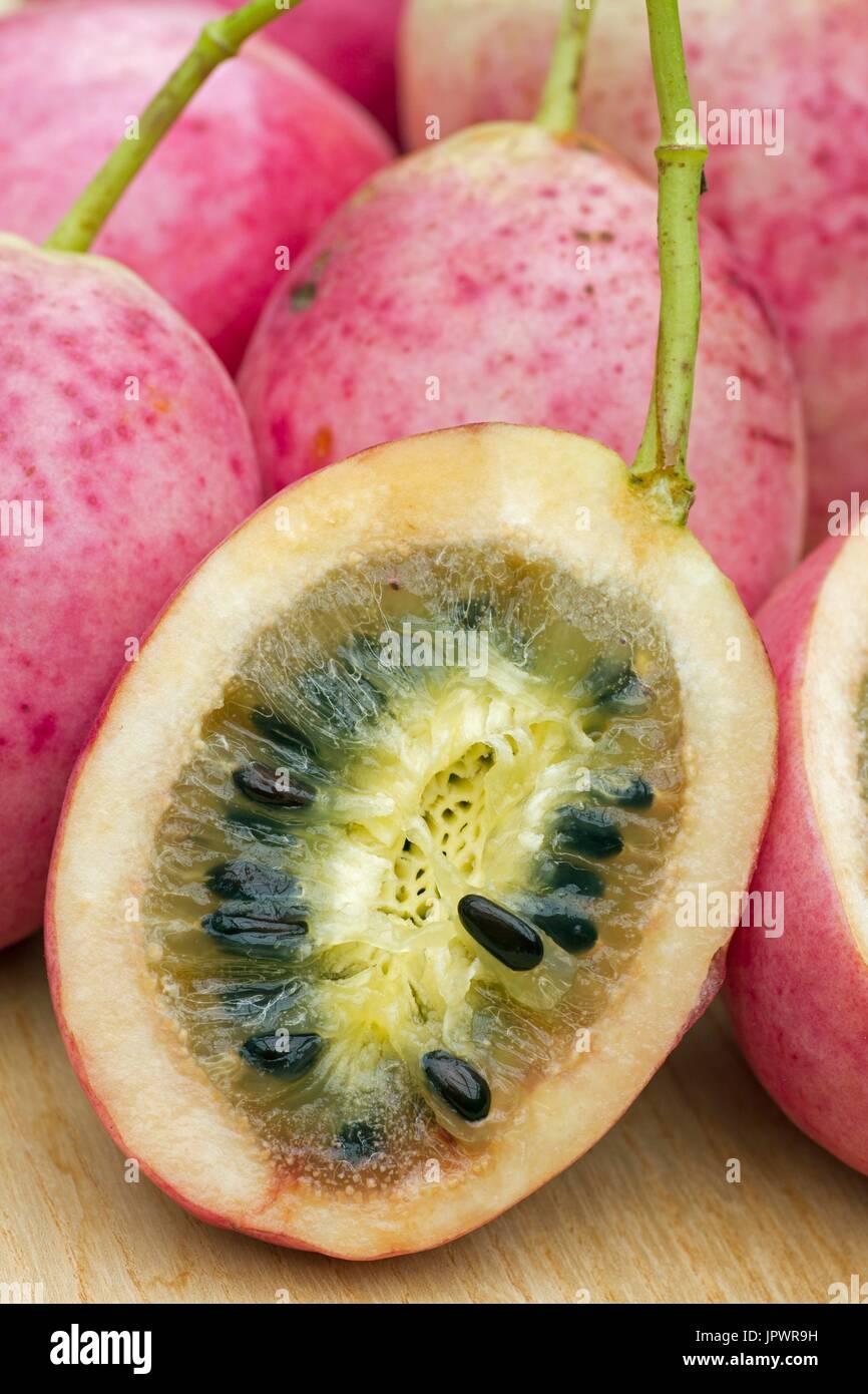 Japanese staunton vine fruits - Stock Image