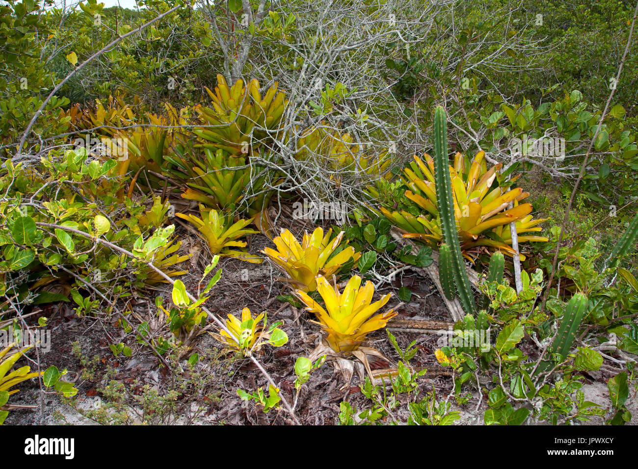 Vegetation Restinga - Bahia Brazil Monte Pascoal Stock Photo