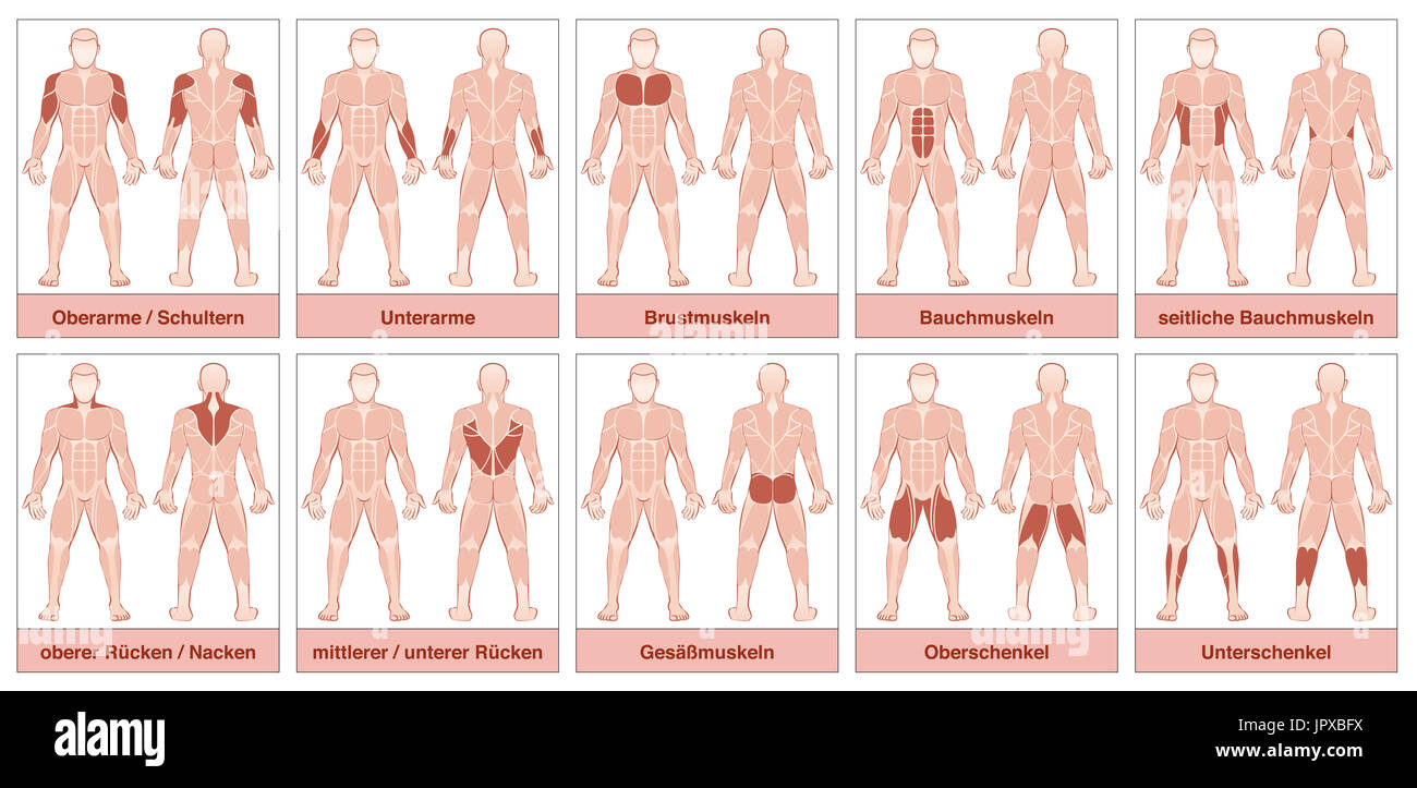 Muscle Chart With German Names Male Body With The Largest Human