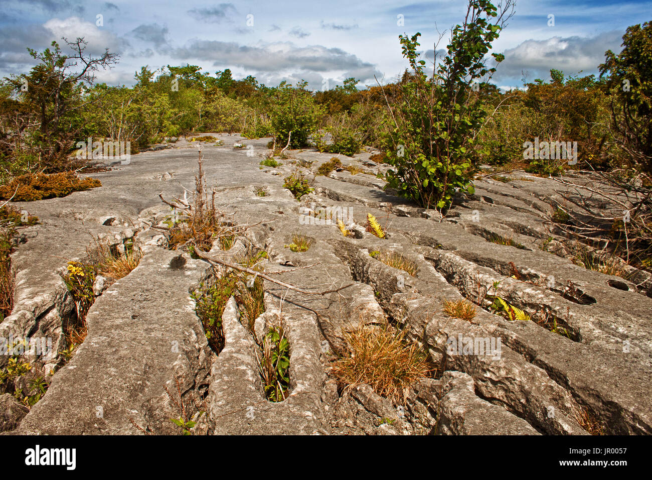 Limestone pavement leading to the woodland landscape of Gait Barrows Stock Photo